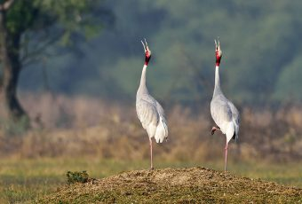 Golden Triangle Tour With Bharatpur